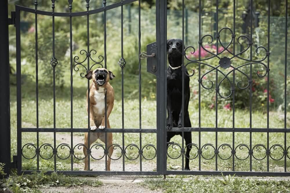 malcha mahal guard dog