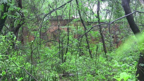 Malcha Mahal Forest