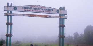 Chandoli National Park Entry