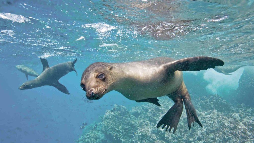 the-galapagos-islands