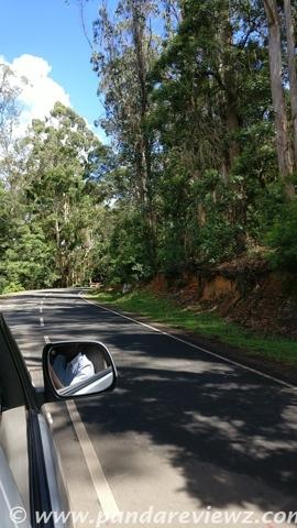 forest tour kodaikanal