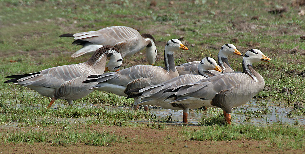 Bharatpur birds december
