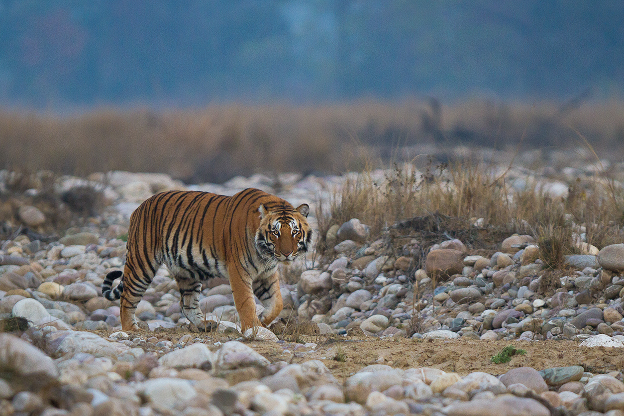 jim corbett in december