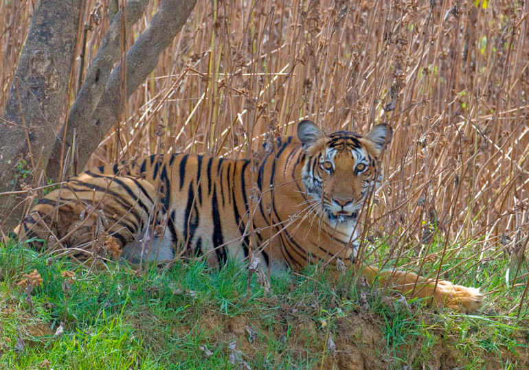 kabini wildlife