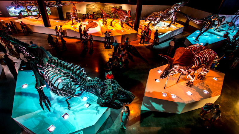 Houston Museum of Natural Science at After Dark