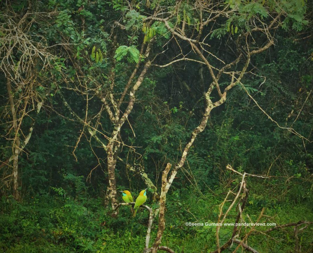wilpattu national park spotting birds